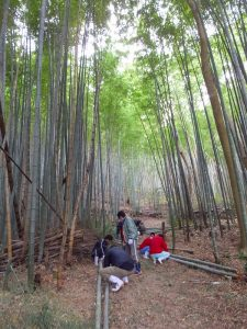 高松市内にある竹林