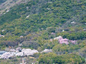 香色苑から望む屋島