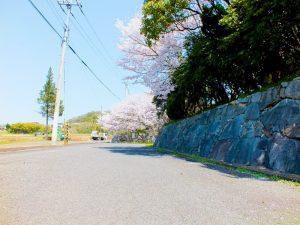 施設入口にある桜の木